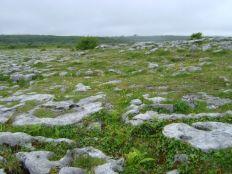 suelo-rocoso